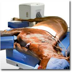 The Ellegro Limb MRI in use on a horses hindlimb