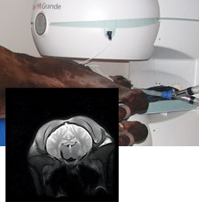 Vet-MR Grande XL in use scanning a horses head with an inset of an actual scan