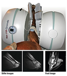 Vet-MR Grande XL in a rotated position scanning a horses leg with sample images